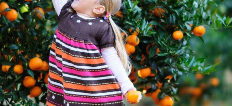 KAKI – ovocný dar podzimu