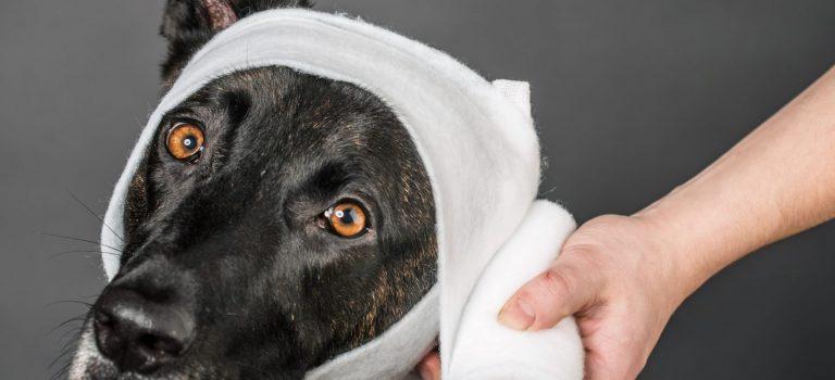 Kurzy první pomoci pro psy