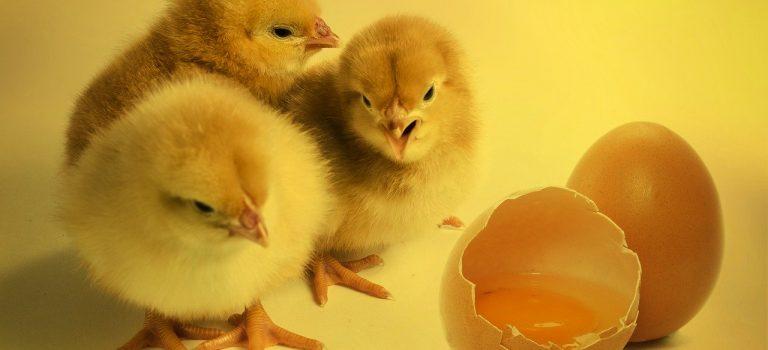 Co (ne)víte o vejcích?