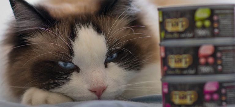 5 tipů jak na kočičího mlsouna