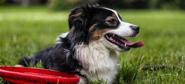 Zasportujte si se psem
