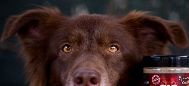 Jak se vypořádat se zdravotními neduhy psů?